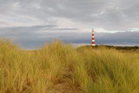 Blick auf den Leuchtturm durch Dünengras hindurch